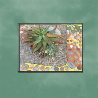 Succulent with Rocks